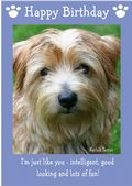 "Norfolk Terrier-Happy Birthday - ""I'm Just Like You"" Theme"